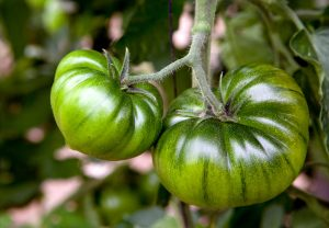 Dumas Tomate