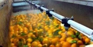 Lavar Fomesa Fruitech