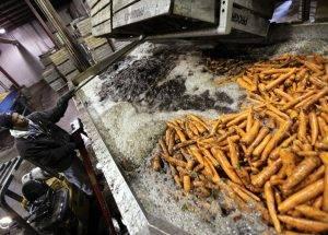 lavar zanahoria agua