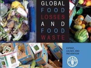 tirar global food
