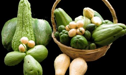 Chayote una hortaliza con atributos nutricionales