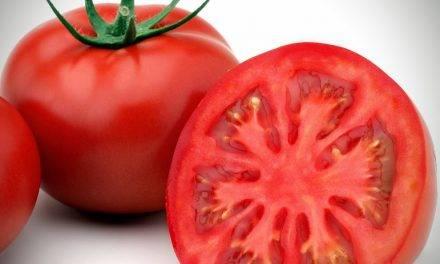 Se perfecciona el control del ablandamiento del tomate