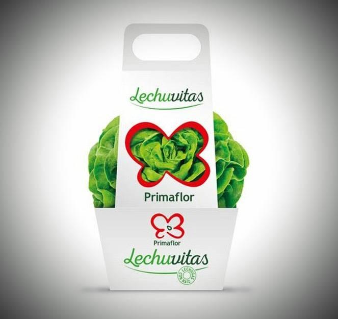 Lechuvitas, una forma de cultivar convertida en marca