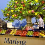 Las manzanas Marlene, de los árboles a los supermercados … y, con criterio