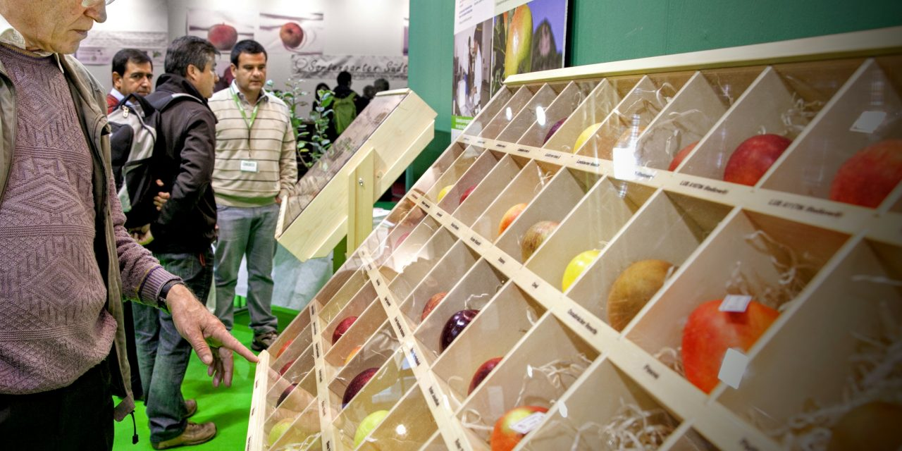 En manzanas los aspectos de calidad, variedades y la eficiencia del marketing y logística son determinantes
