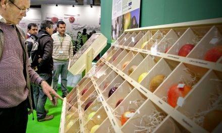 En manzanas los aspectos de calidad, variedades y la eficienca del marketing y logística son determinantes