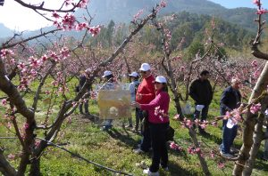 floracion-frutales