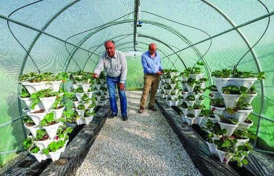 En Qatar para promover verduras locales instalan nuevos invernaderos