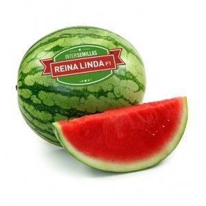 Sandia Reina Linda