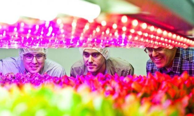 Las instalaciones de hidroponía vertical para producir vegetales son cada vez mayores