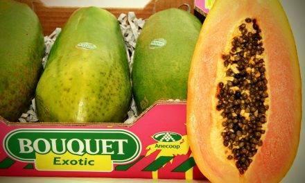 """Anecoop comercializará papaya con """"Exóticos del Sur"""""""