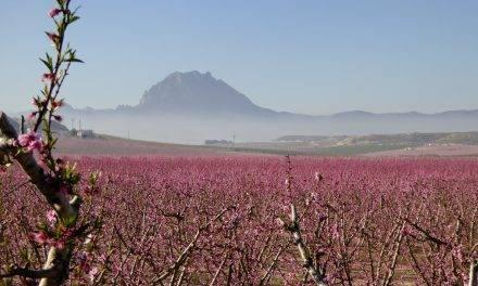 Las floraciones de las regiones frutícolas son un espectáculo visual y un turismo de cultura medioambiental