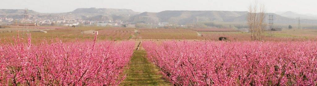 Serra Brisa Fruiturisme