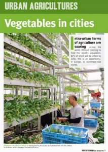 Vegetables cities