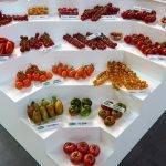 Qué tomates debe haber en una tienda