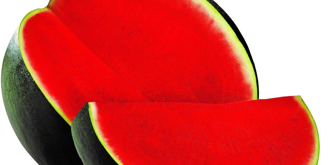 Sandías y melones de éxito, innovaciones de semillas Fitó