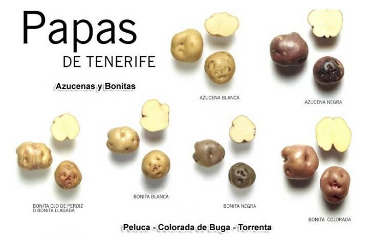 Investigación sobre la cebolla y patata en Canarias