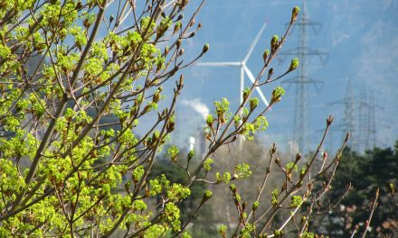 Medioambiente, Ciudad Verde y alimentación sostenible