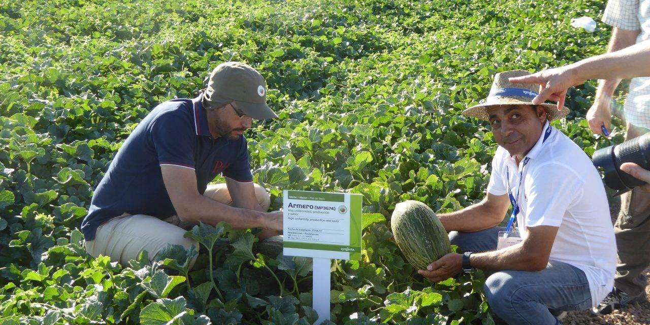 El juego varietal en los melones es un debate entre mejoradores, productores y consumidores