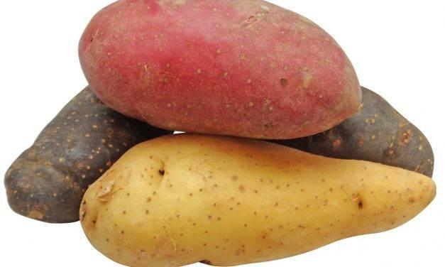 Las patatas y el cambio climático