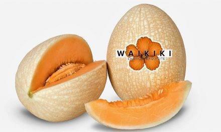 Waikiki un melón exquisito