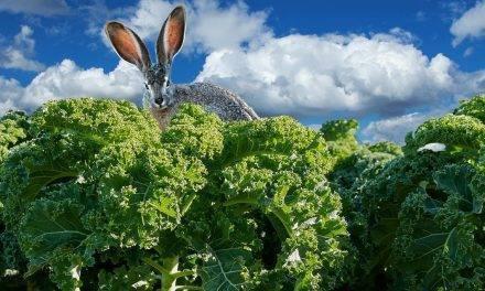 El Kale, ¿continuará ganando popularidad?