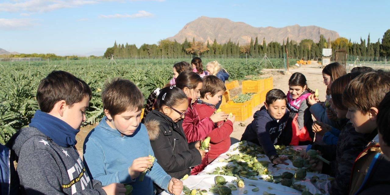 Los escolares de la Vega Baja celebran el día de la alcachofa