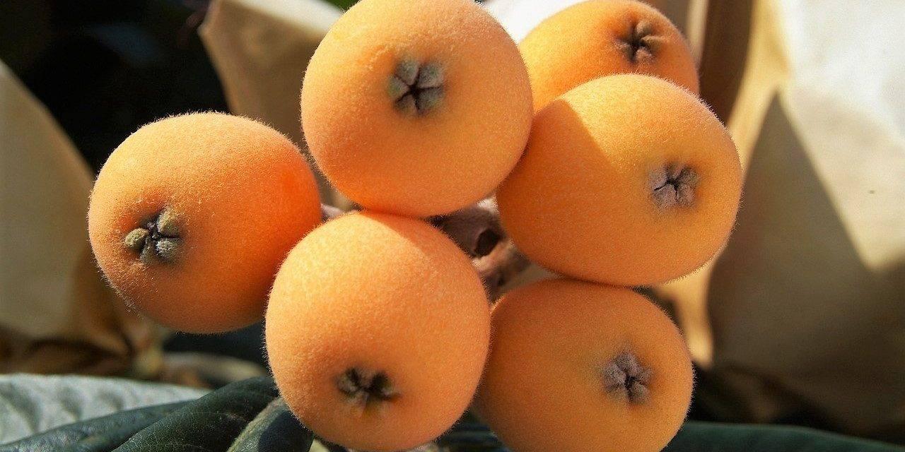 Nísperos, la primera fruta de árbol de la temporada