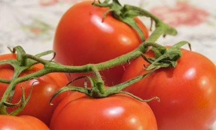 """El tomate, una """"bomba"""" de salud, dicen en Vegacañada"""