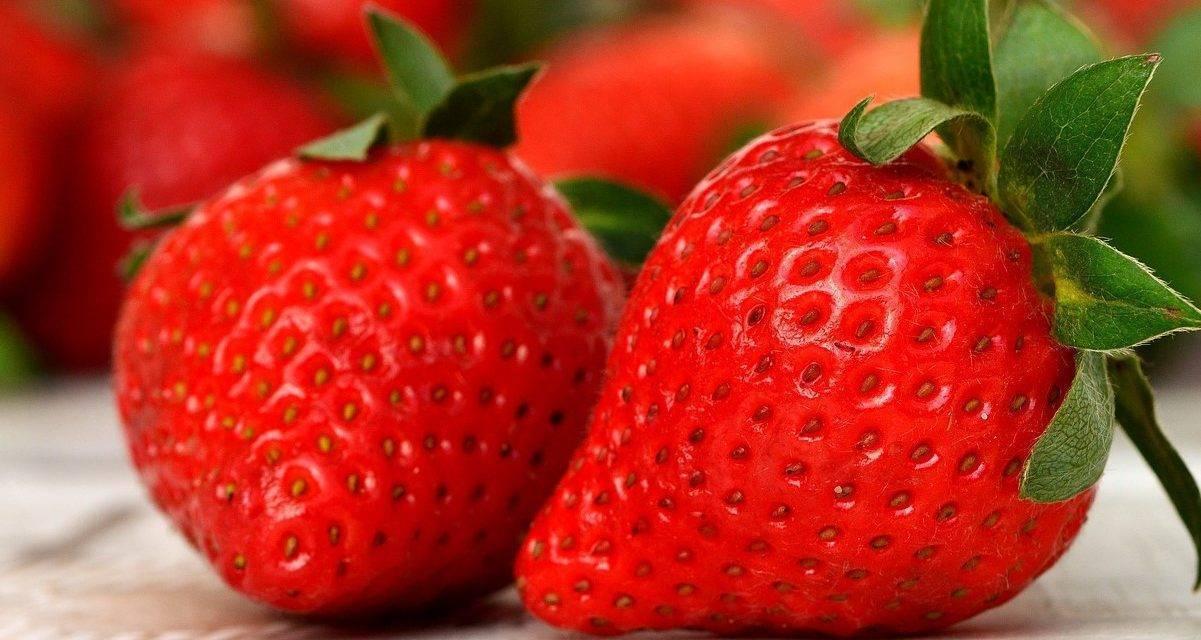 Las fresas anuncian la primavera