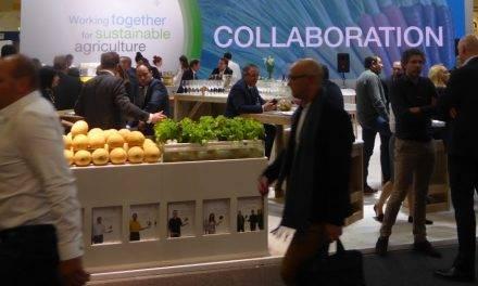Expectativas para el futuro del sector hortofrutícola: las tendencias y los principales impulsores