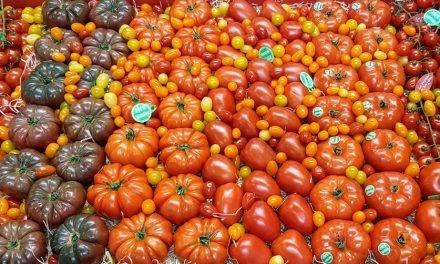 Los tomates y la diversidad