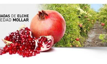 La DOP Granada Mollar de Elche saca partido del aspecto diferenciado de sus frutos