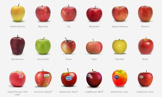 VOG Consortium: after an abnormal year, this season returns to a full harvest of quality apples