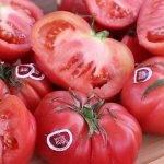 Fitó analiza el valor que aportan las semillas en la agroalimentación