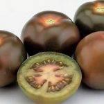 Hay tomates de la variedad Kumato® con etiqueta BIO