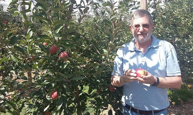Kissabel®, buena cosecha en el Hemisferio Norte