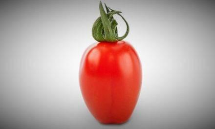 Extraordinario sabor del tomate cherry Ferdinand
