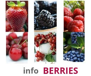 Ads Info Berries