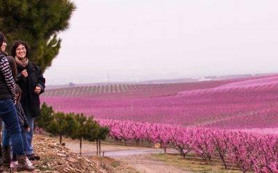 La primavera de Japón en Aitona, Lleida y Cieza, Murcia