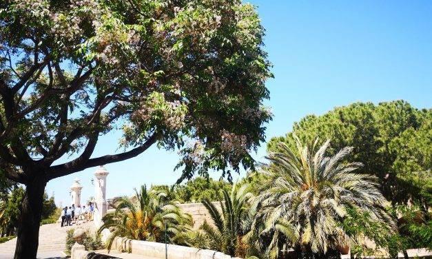 Es la época de los paraísos en Valencia