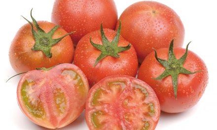 Los tomates Amela y Adora de la cooperativa La Palma en Smart Agrifood Summit