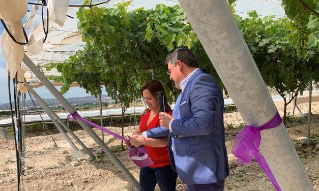 Uvasdoce y una presentación de uvas para los niños