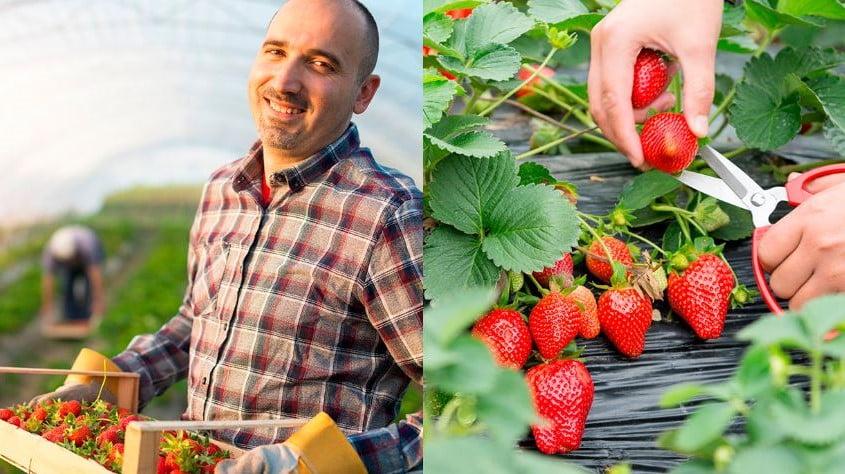 Asociación mexicana de exportadores de berries en su congreso