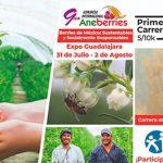 Las Berries de México están de moda: un ejemplo para otros países