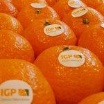 Los cítricos distribuidos con la figura de calidad de la IGP crecen un 25%