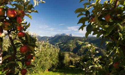 Cosecha de manzanas en Italia (Tirol del Sur) con buen panorama