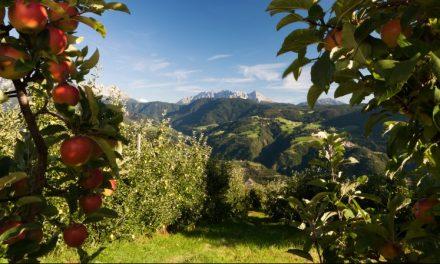 Cosecha de manzanas en el Tirol Sur de Italia con buen panorama