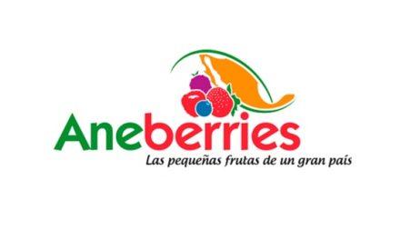 AneBerries de México tendrá el año próximo la certificación BERRY G.A.P.