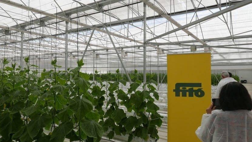 Fitó comercializará semillas sin tratamiento fitosanitario